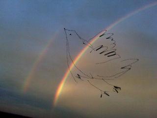 Bluebird in a storm2