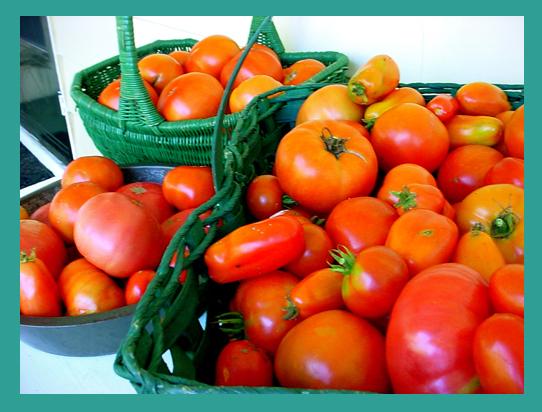 Tomatoes border