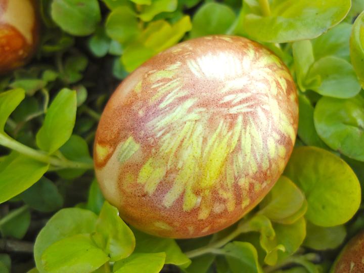 Dandelion egg 2