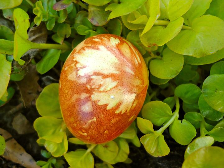 Celery egg