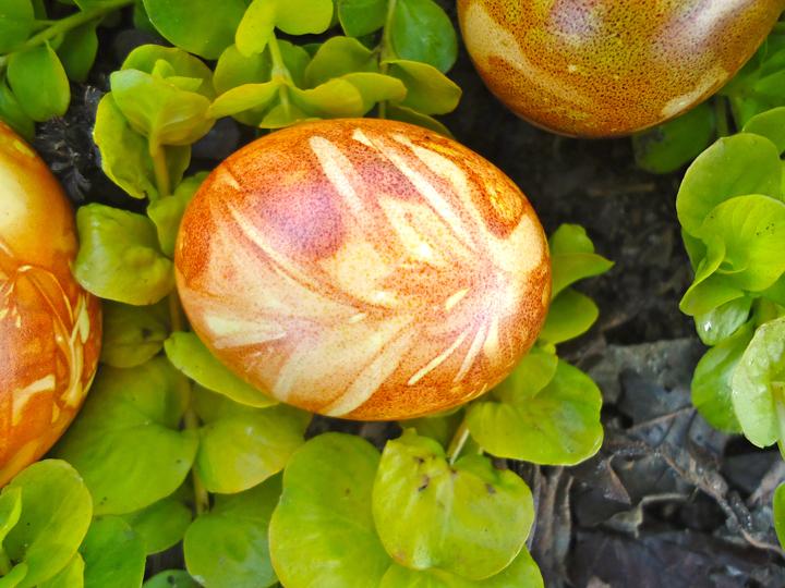 Rosemary egg