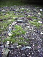 Weedsonlabyrinth