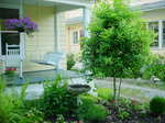 Front_porch_tree