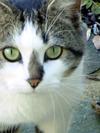 Pretty_kitty_1
